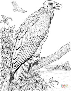 vulture-coloring-page